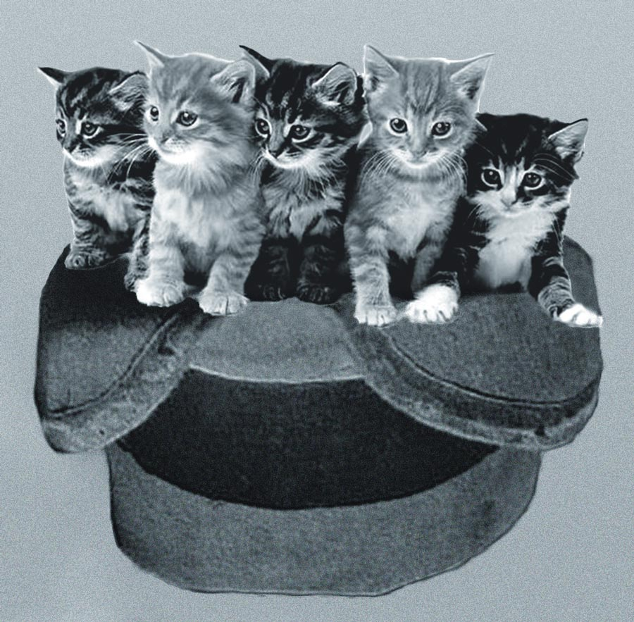 5 cute kittens in a warm hat together