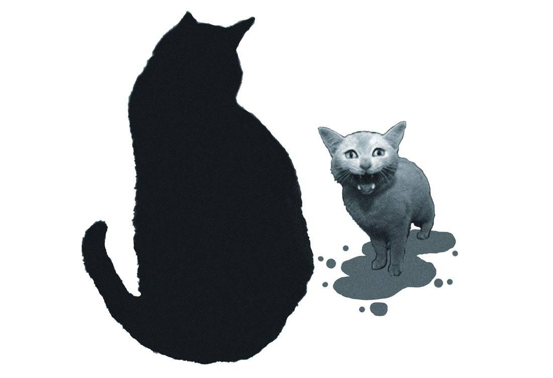 Poor wee paint-covered cat with Tom the seafurring feline