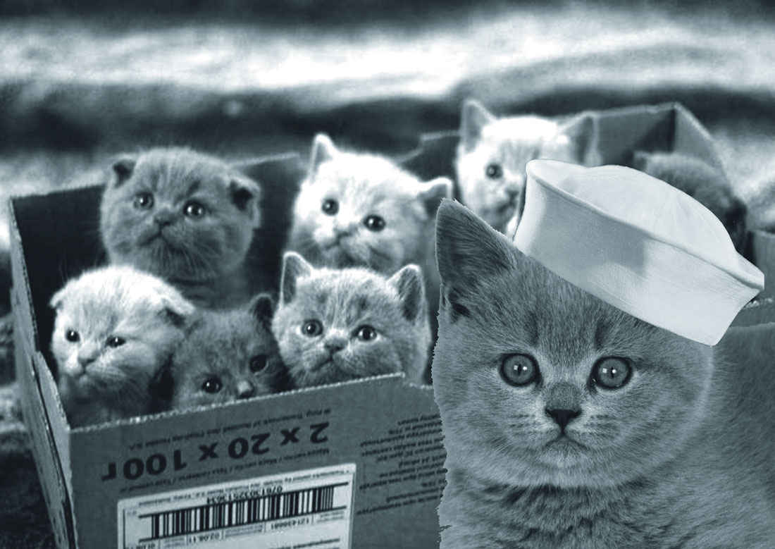 A cardboard box full of warm fuzzy kittens and one kitten wearing a sailor's hat
