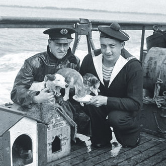 2 Sailors holding some cats and a dog and giving them food.