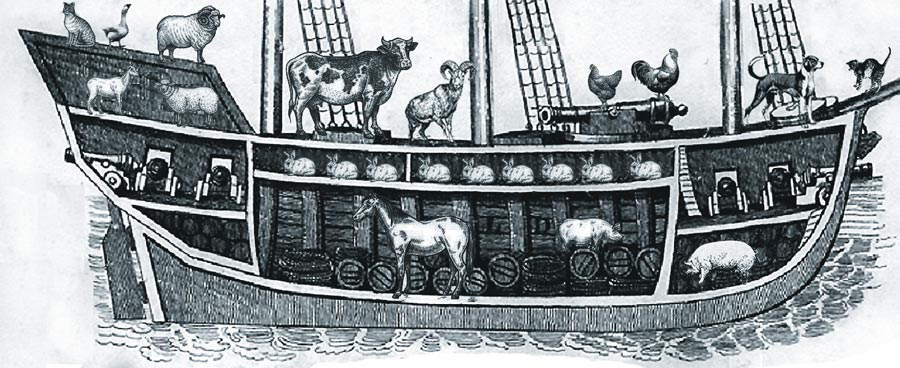 Cross section of an old ship full of animals, complete with ships cats and seafaring felines.