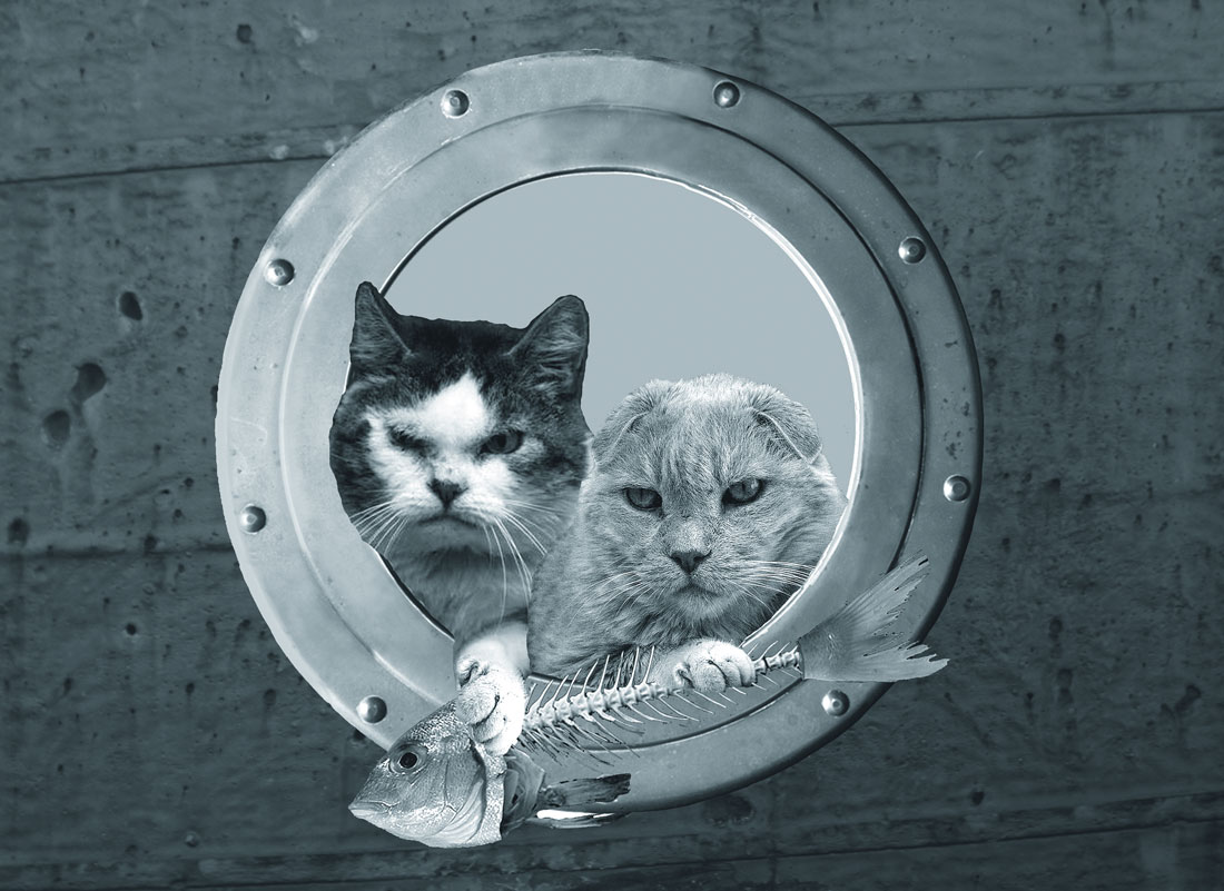 A skirtchier pair of seafaring felines you never saw, Tumtum and Cheechee, glowering from a rusty old ironside's porthole