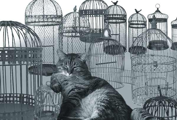 Happy fat cat with empty birdcages. The ultimate trip for all ships cats and seafaring felines.