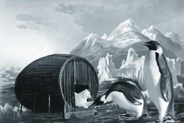 Strange times make for strange bedfellows for seafaring felines and ships cats.The Cat sheltering with two penguins