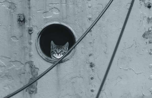 Cat on watch at a porthole. Ships cats and seafaring felines, along with their land-dwelling cousins, possess uncanny visual acuity.