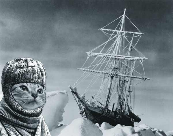 Brave Mrs Chippy and her ice-bound ship. Ships cats and seafaring felines work as hard as their human shipmates.