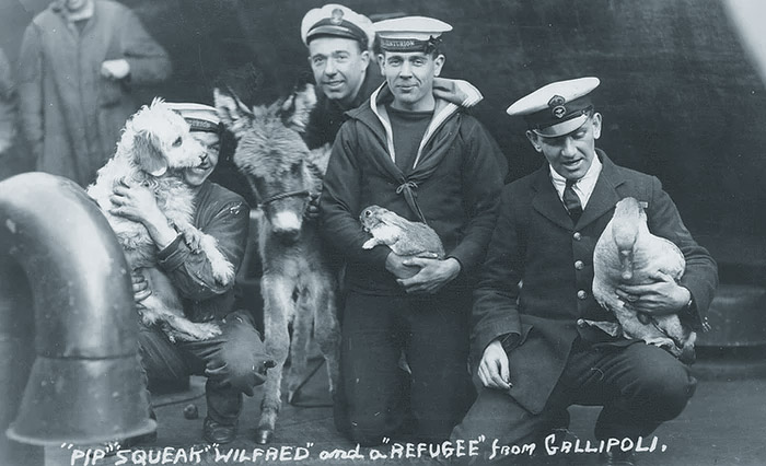 Not just seafurring felines but all manner of animals. Sailors with a dog, a rabbit, a duck and a donkey, all rescued from Gallipoli.